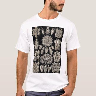 Ernst Haeckel - Bryozoa2 Tshirt