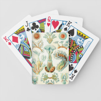 Ernst Haeckel Bryozoa invertebrates Bicycle Playing Cards