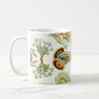 Ernst Haeckel Bryozoa invertebrates Coffee Mug