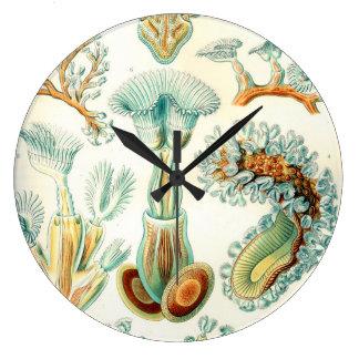 Ernst Haeckel Bryozoa invertebrates Large Clock