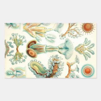Ernst Haeckel Bryozoa invertebrates Sticker