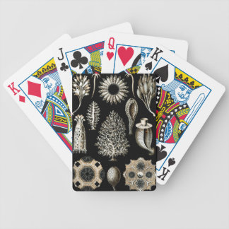 Ernst Haeckel Calcispongiae Bicycle Playing Cards