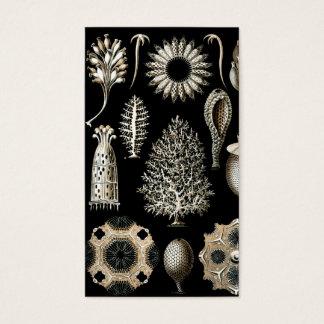 Ernst Haeckel Calcispongiae Business Card