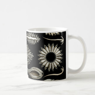 Ernst Haeckel Calcispongiae Coffee Mug