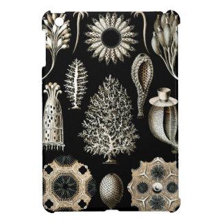 Ernst Haeckel Calcispongiae iPad Mini Cover