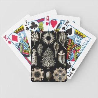 Ernst Haeckel Calcispongiae Poker Deck