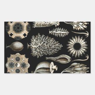 Ernst Haeckel Calcispongiae Sticker