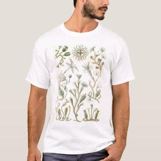 Ernst Haeckel - Campanariae T-Shirt