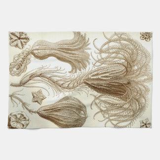 Ernst Haeckel Crinoidea feather stars Kitchen Towel