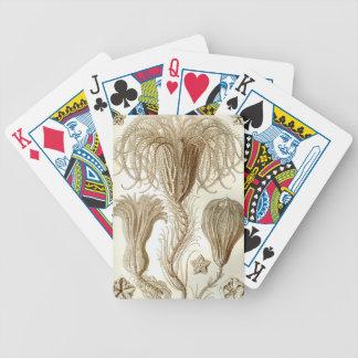 Ernst Haeckel Crinoidea feather stars Poker Deck