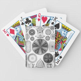 Ernst Haeckel Diatomea Poker Deck