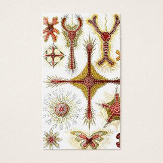 Ernst Haeckel Discoidea Business Card