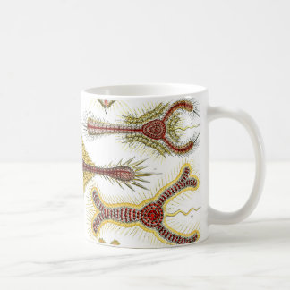 Ernst Haeckel Discoidea Coffee Mug