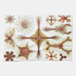 Ernst Haeckel Discoidea Kitchen Towel