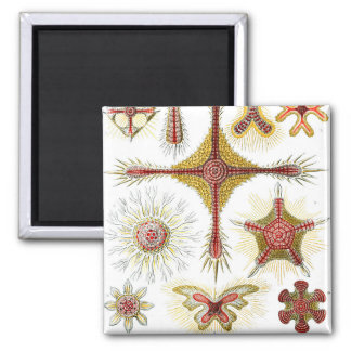 Ernst Haeckel Discoidea Magnet