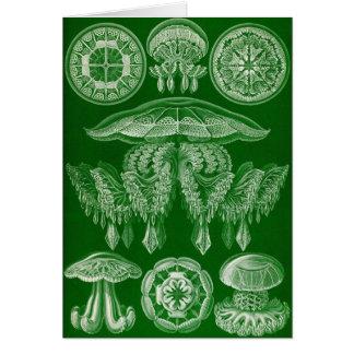 Ernst Haeckel - Discomedusae4 Card