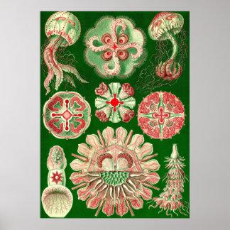 Ernst Haeckel - Discomedusae5 Poster