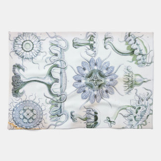 Ernst Haeckel Discomedusae Jellyfish Kitchen Towel