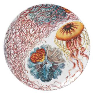 Ernst Haeckel Discomedusae Jellyfish Plate