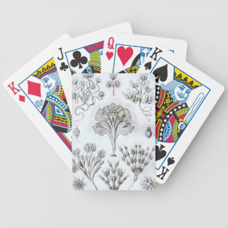Ernst Haeckel Flagellata Bicycle Playing Cards