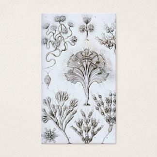 Ernst Haeckel Flagellata Business Card