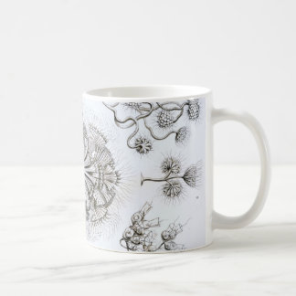 Ernst Haeckel Flagellata Coffee Mug