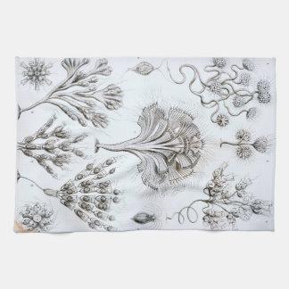 Ernst Haeckel Flagellata Kitchen Towel
