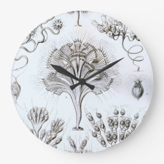 Ernst Haeckel Flagellata Large Clock