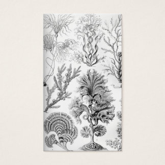 Ernst Haeckel Fucoideae weeds! Business Card