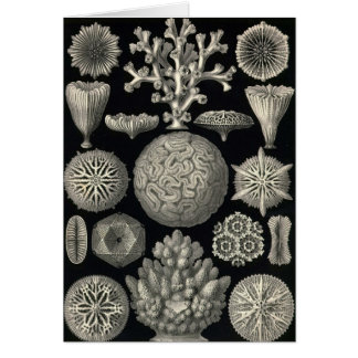 Ernst Haeckel - Hexacoralla Card