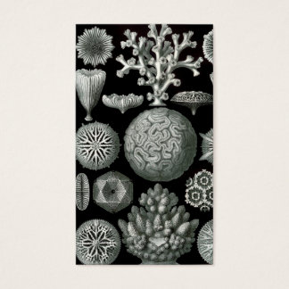 Ernst Haeckel Hexacorallia Coral Business Card