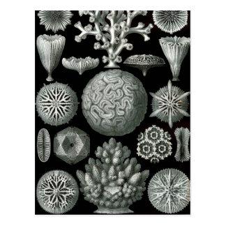 Ernst Haeckel Hexacorallia Coral Postcard