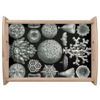 Ernst Haeckel Hexacorallia Coral Serving Tray