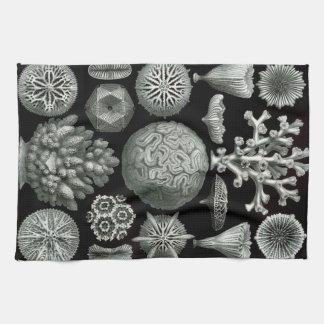 Ernst Haeckel Hexacorallia Coral Towels