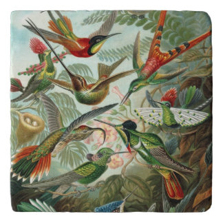 Ernst Haeckel Hummingbirds - Art Forms of Nature Trivet