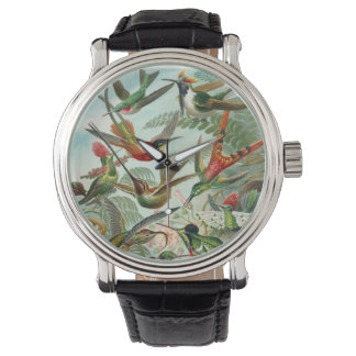 Ernst Haeckel Hummingbirds Watch