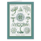 Ernst Haeckel - Kuntsformen der Nature - Tafel 18 Card