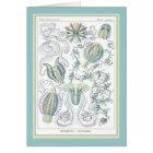 Ernst Haeckel - Kuntsformen der Nature - Tafel 27 Card