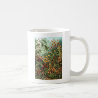 Ernst Haeckel Muscinae Coffee Mug