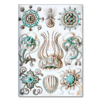 Ernst Haeckel Narcomedusae jellyfish! Card