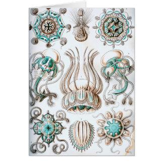 Ernst Haeckel Narcomedusae jellyfish! Card