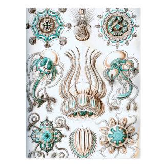 Ernst Haeckel Narcomedusae jellyfish! Postcard