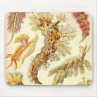 Ernst Haeckel - Nudibranchia Detail Mouse Pad