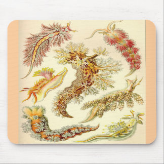 Ernst Haeckel - Nudibranchia Mouse Pad