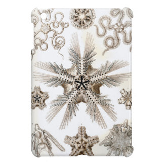 Ernst Haeckel Ophiodea brittle Stars Cover For The iPad Mini