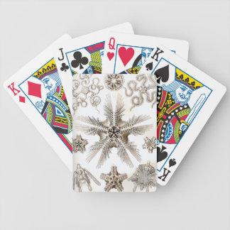 Ernst Haeckel Ophiodea brittle Stars Poker Deck