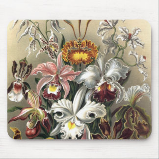 Ernst Haeckel - Orchideae Detail3 Mouse Pad