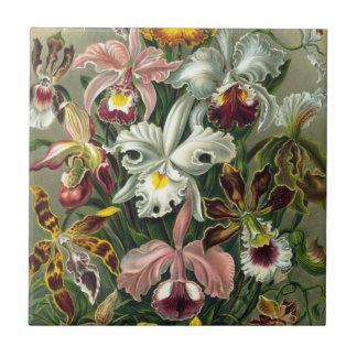 Ernst Haeckel Orchids, Vintage Rainforest Flowers Ceramic Tile