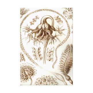 Ernst Haeckel Pennatulida Coral Canvas Print