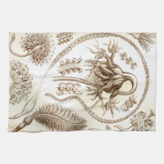 Ernst Haeckel Pennatulida Coral Hand Towels